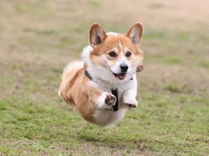最近の犬は飛ぶらしい.jpg